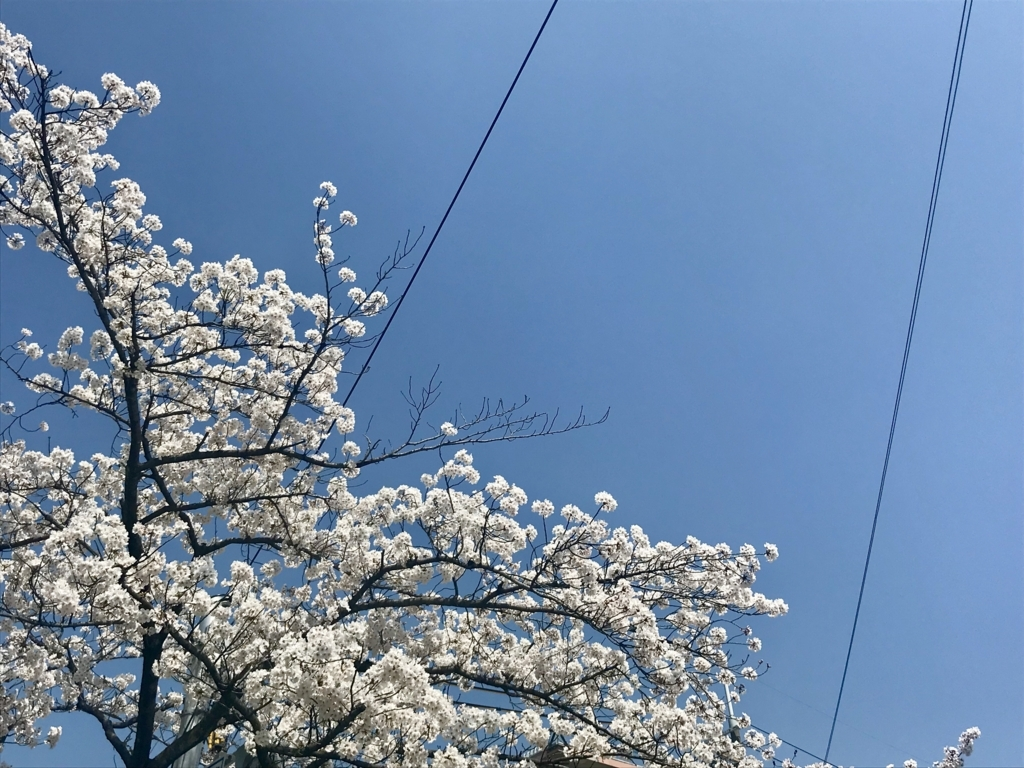 f:id:yukakitajima:20180330080820j:plain