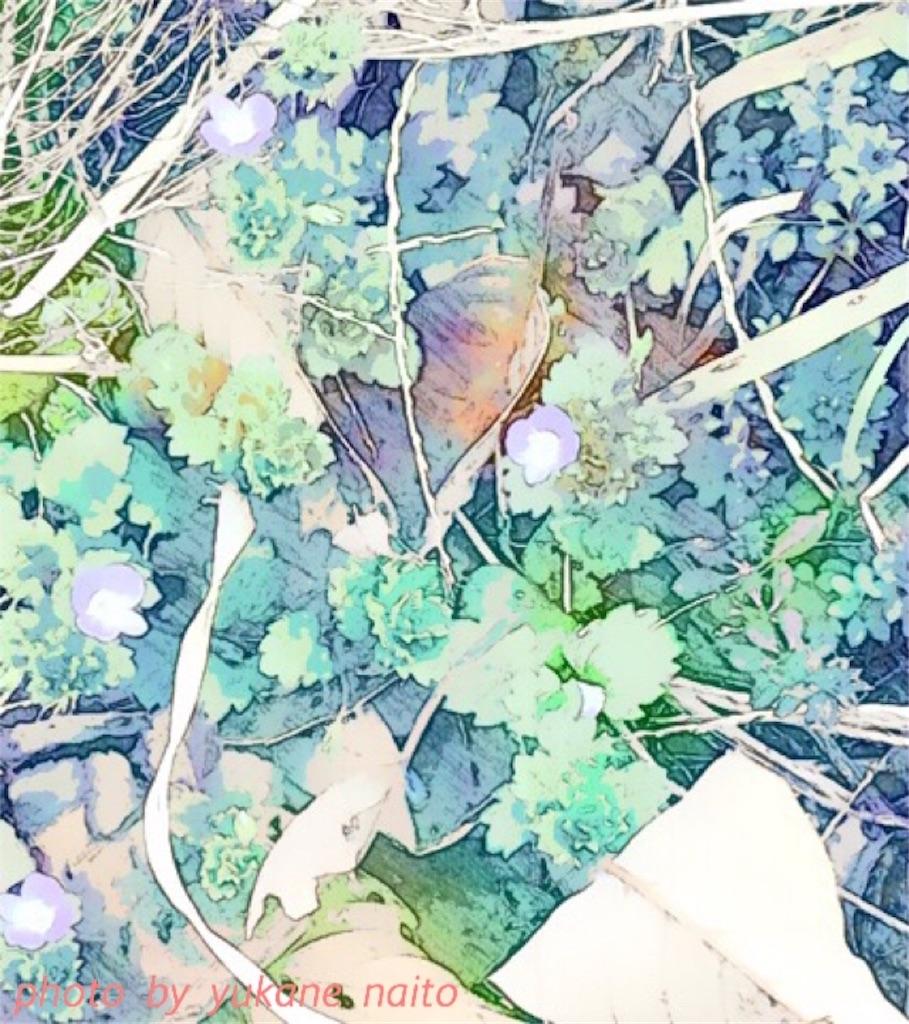 f:id:yukane_naito:20170320133914j:image