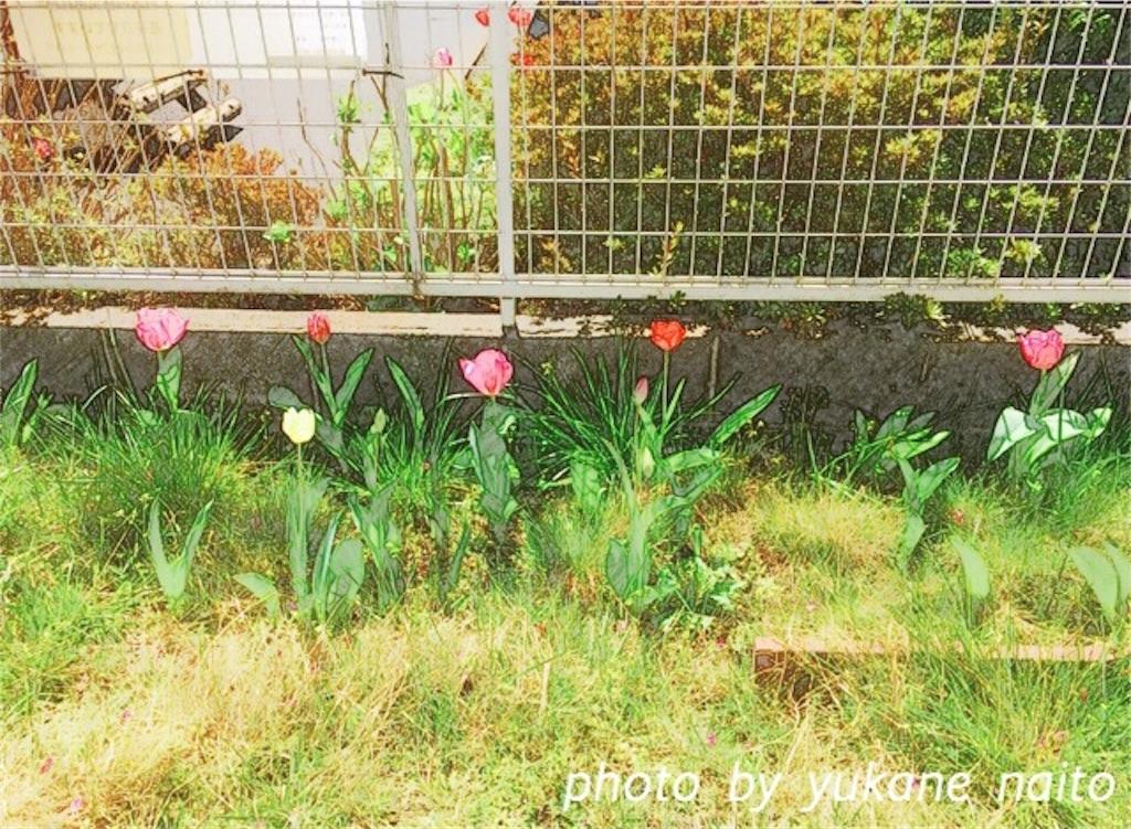 f:id:yukane_naito:20170413114311j:image