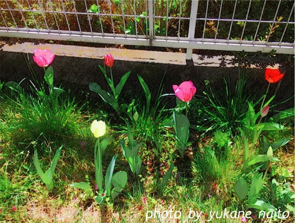 f:id:yukane_naito:20170414150558j:image
