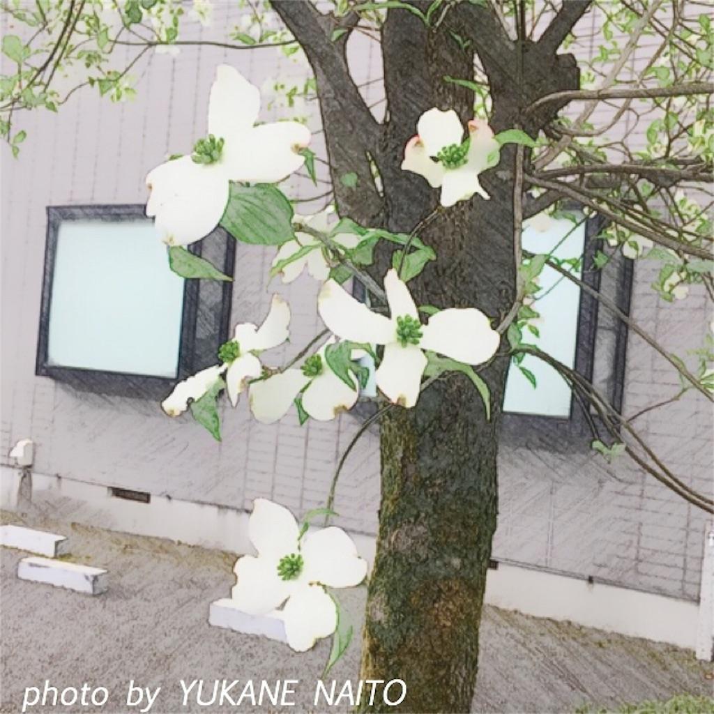 f:id:yukane_naito:20170427120500j:image