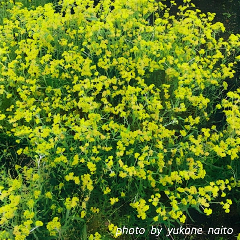 f:id:yukane_naito:20170528101641j:image