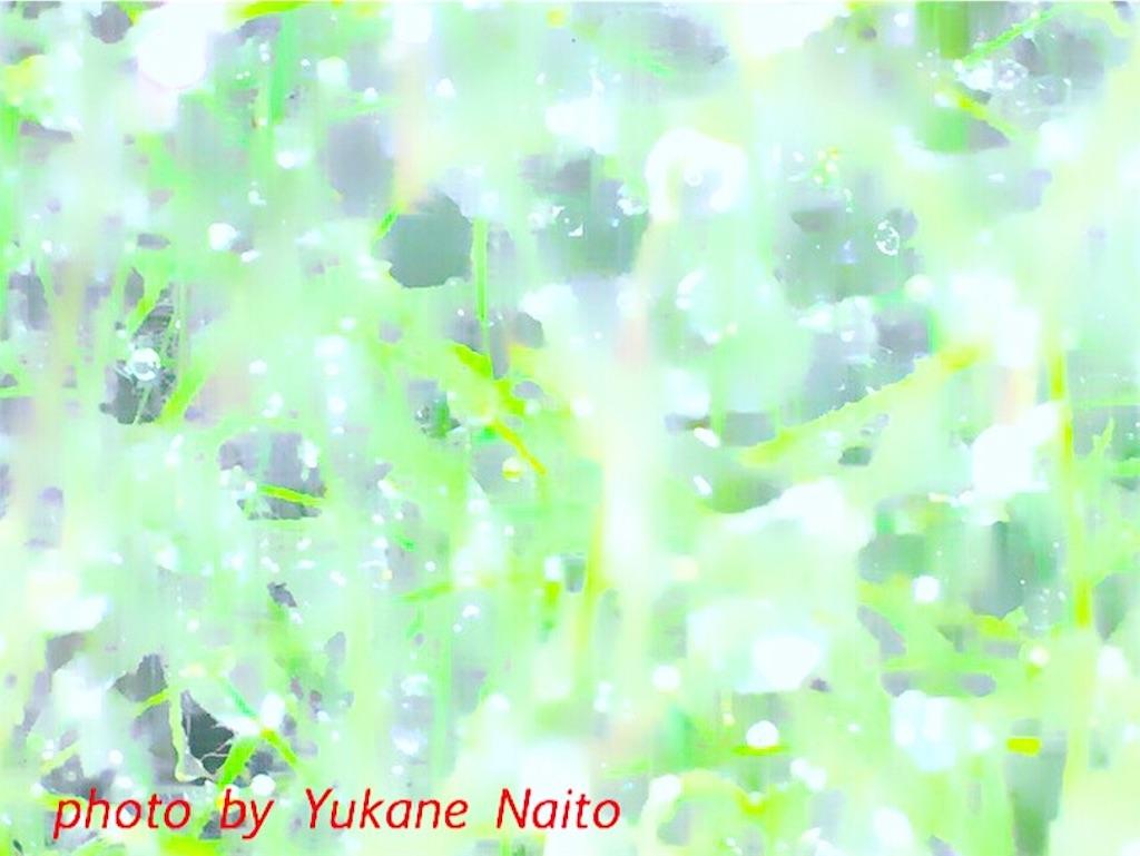f:id:yukane_naito:20170614112234j:image