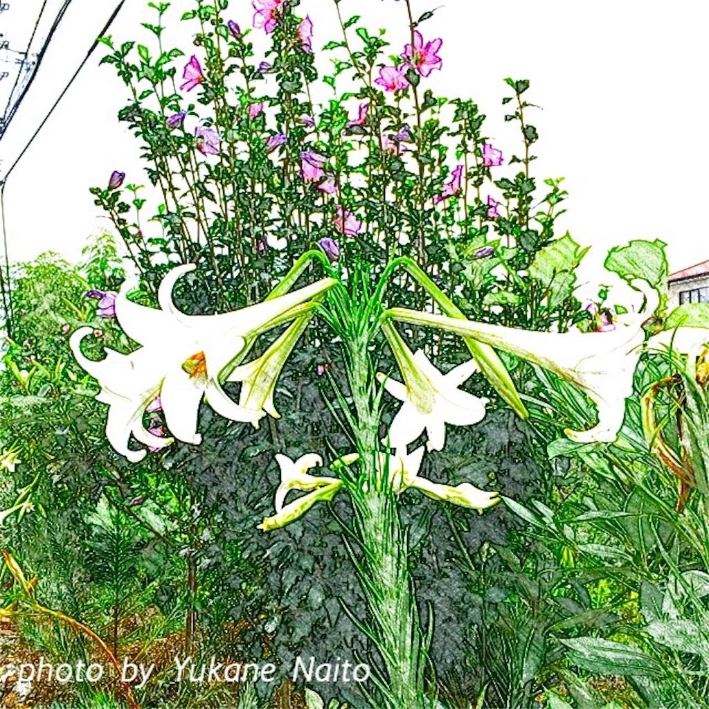f:id:yukane_naito:20170830161954j:image