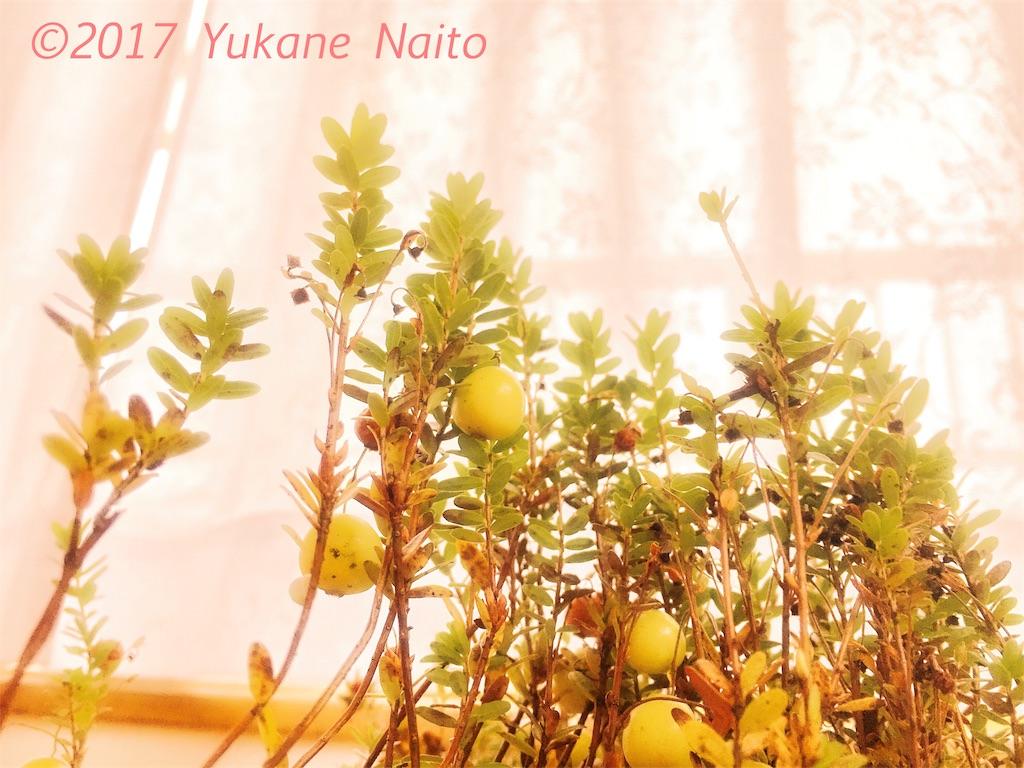 f:id:yukane_naito:20170918110127j:image