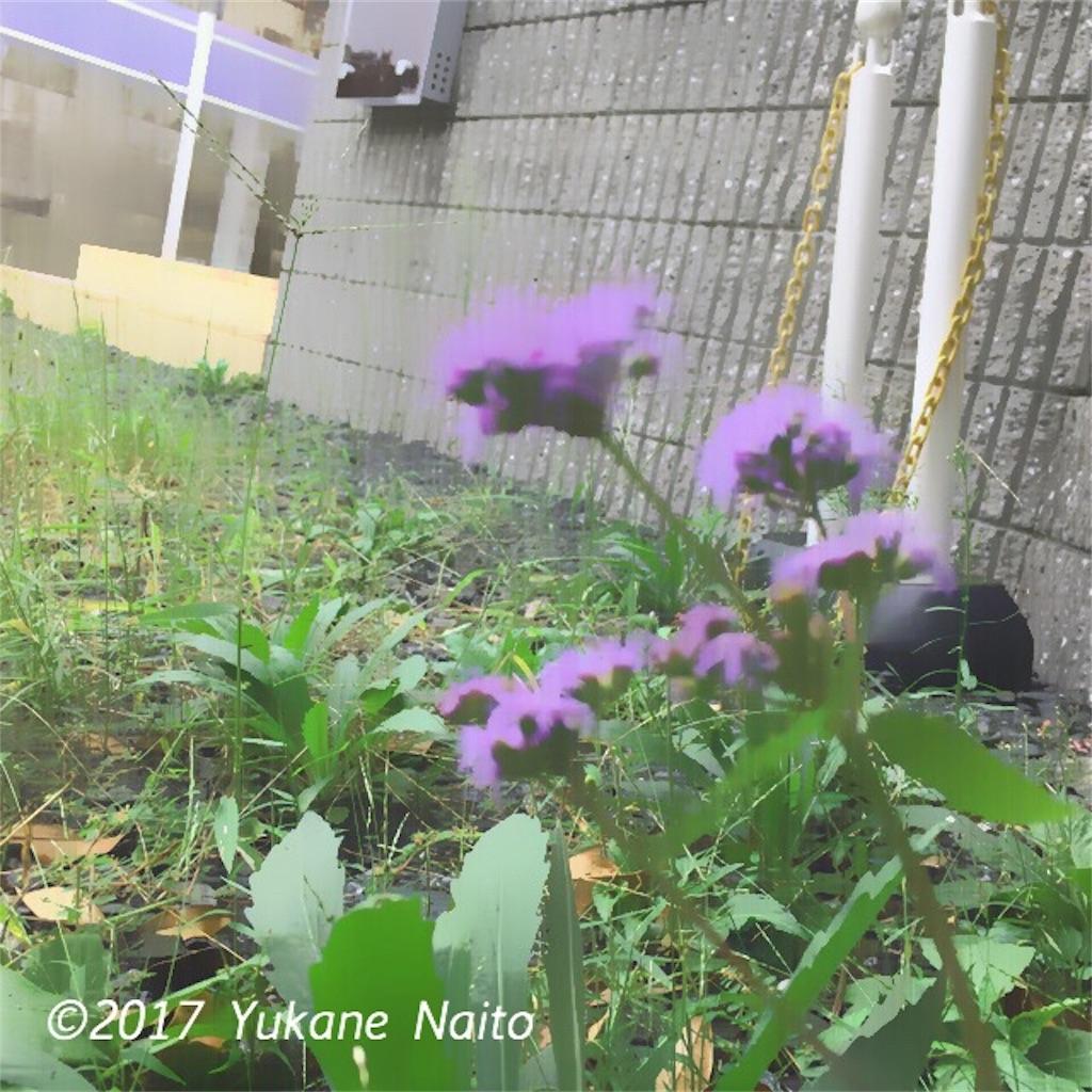 f:id:yukane_naito:20170921114439j:image