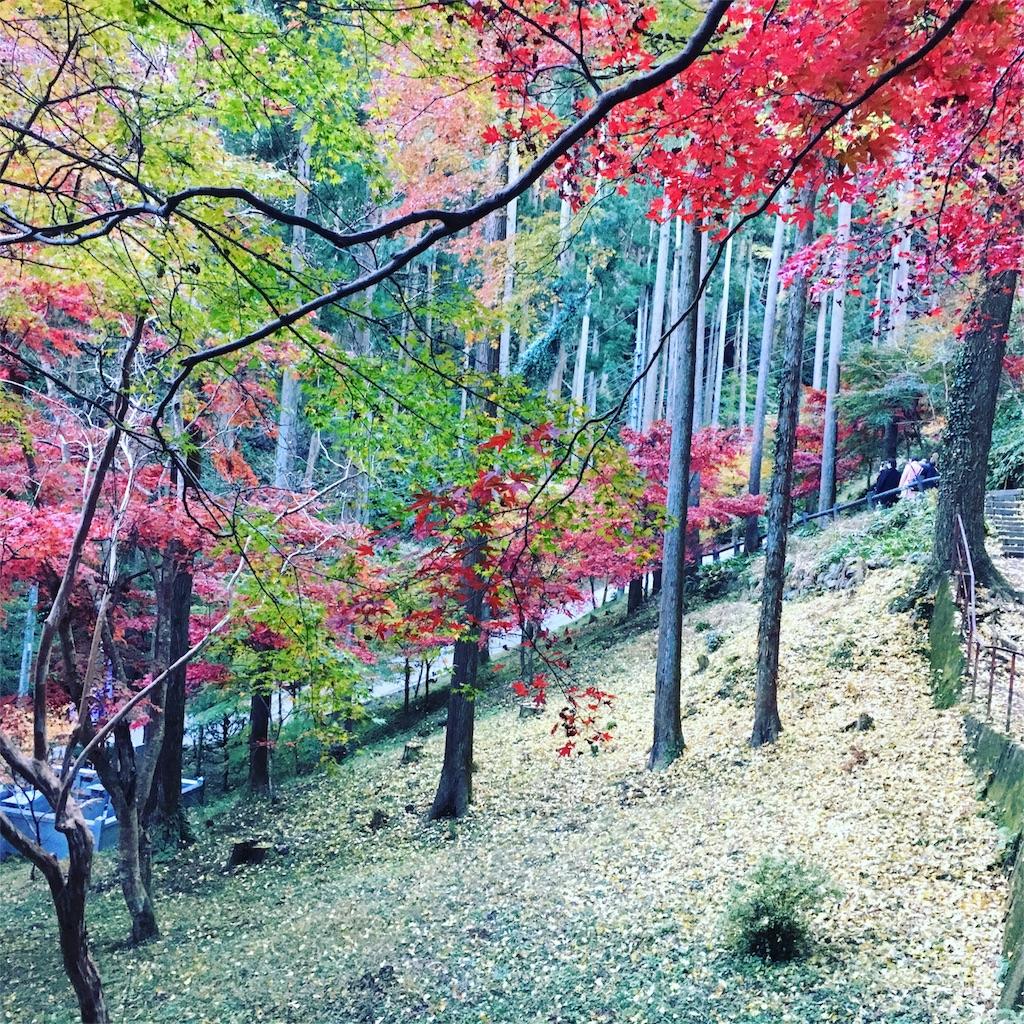 f:id:yukane_naito:20171120131339j:image
