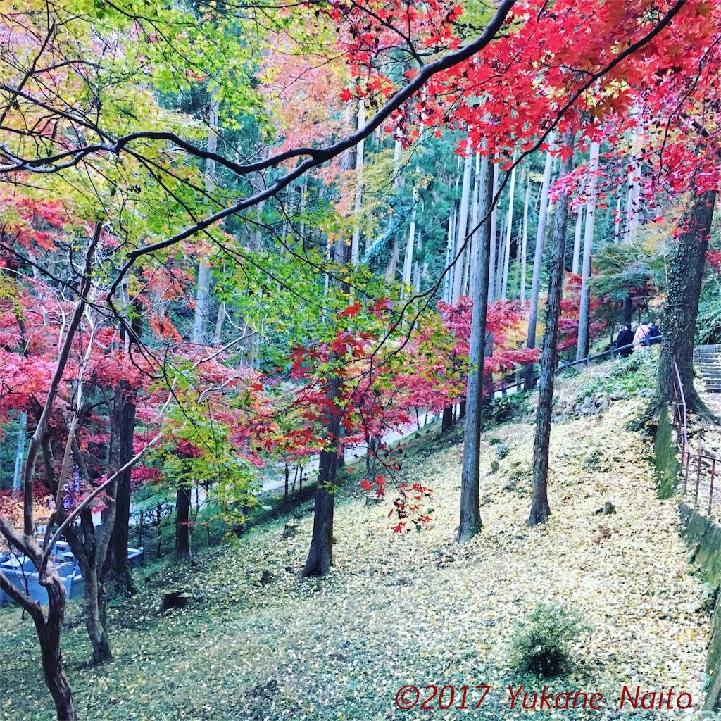 f:id:yukane_naito:20171128135234j:image