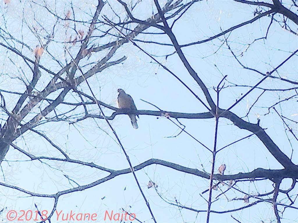 f:id:yukane_naito:20180108115151j:image