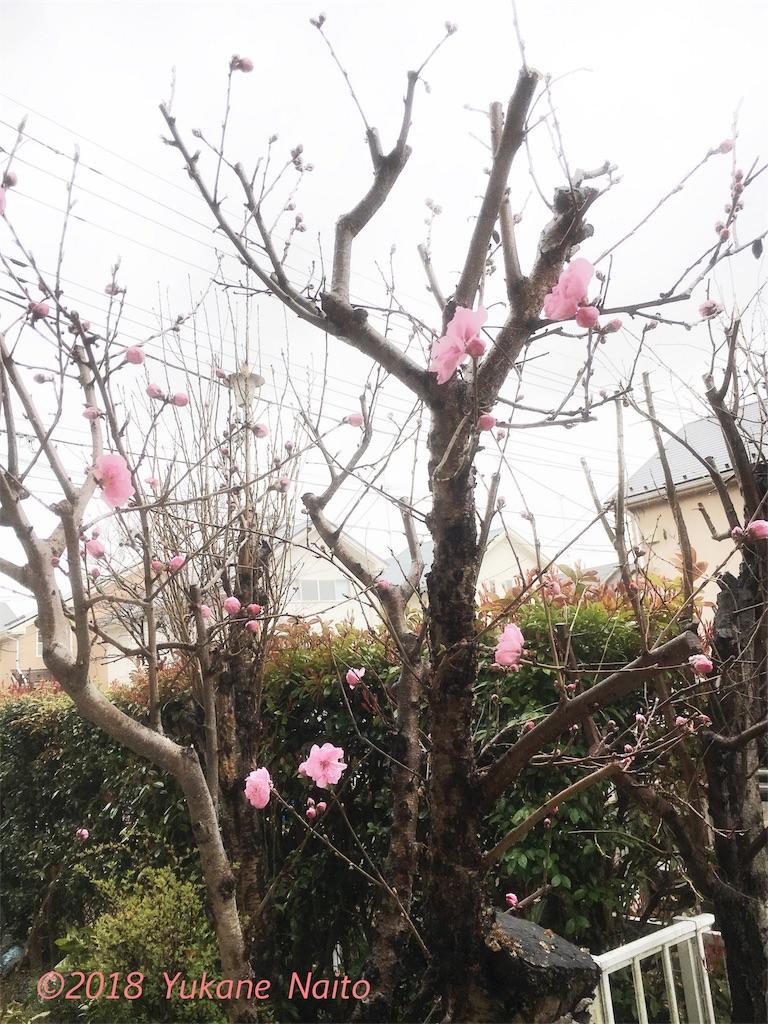 f:id:yukane_naito:20180320100944j:image