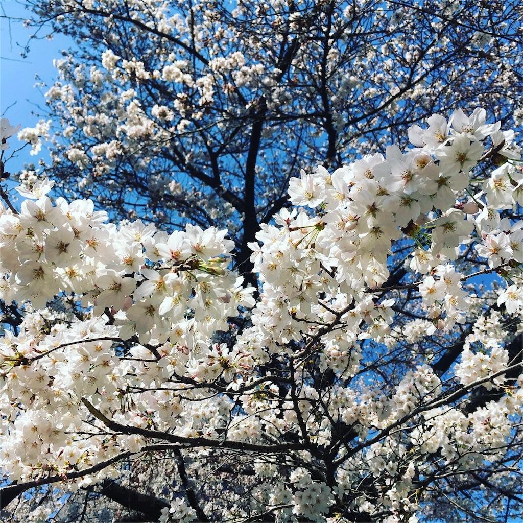 f:id:yukane_naito:20180325163605j:image