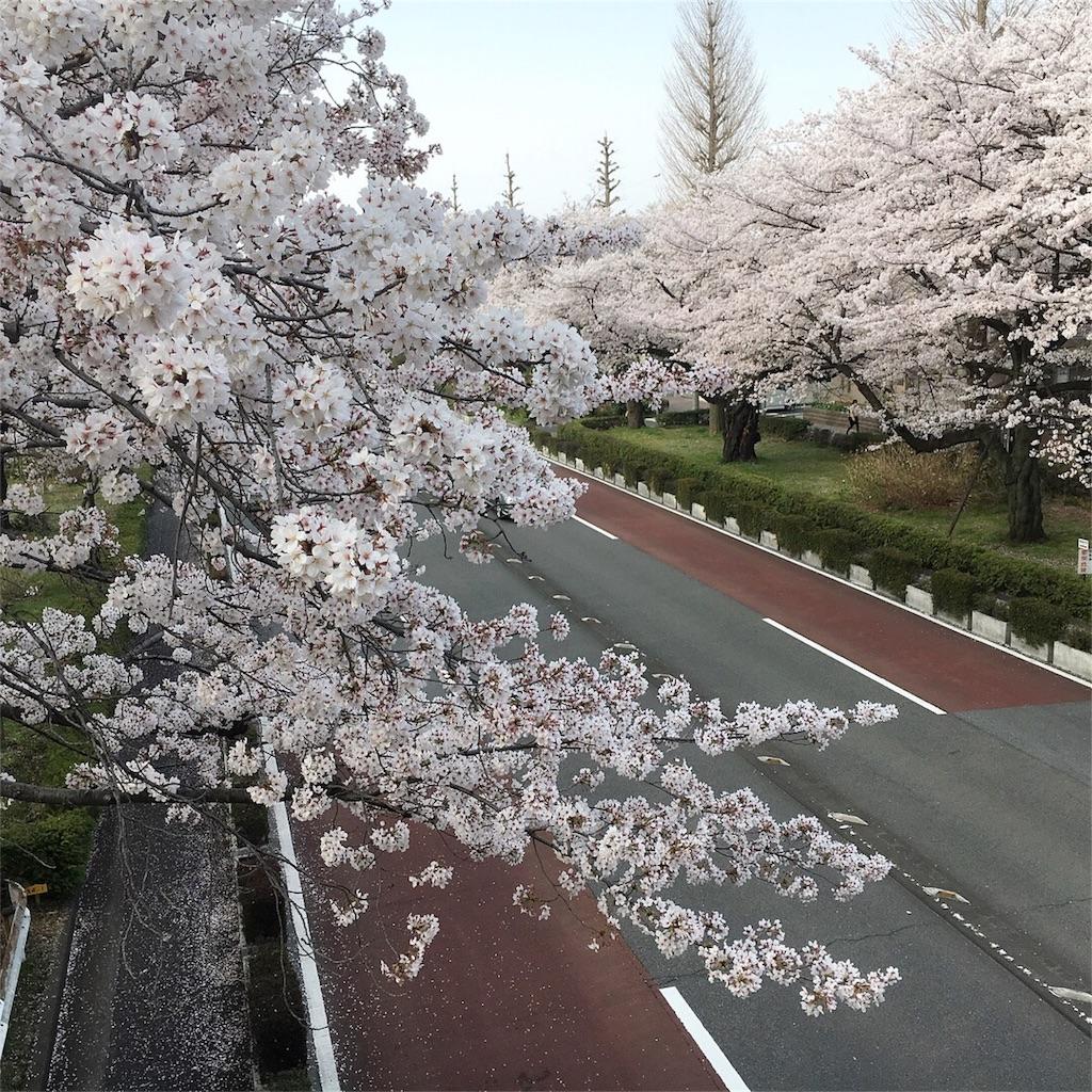 f:id:yukane_naito:20180402130946j:image