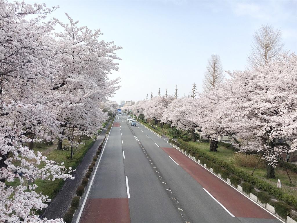 f:id:yukane_naito:20180402131041j:image