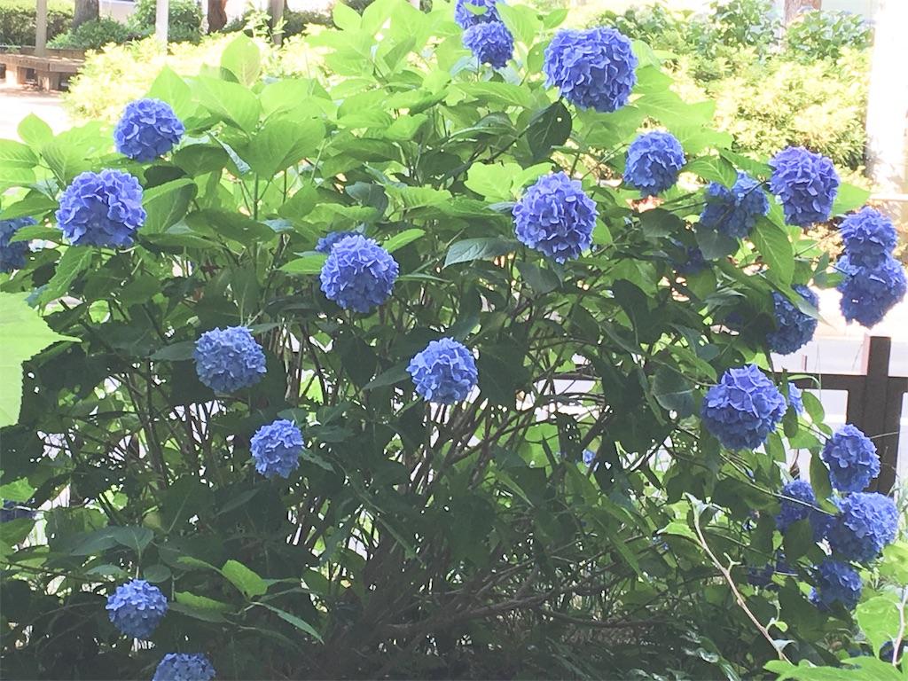 f:id:yukane_naito:20180606113139j:image