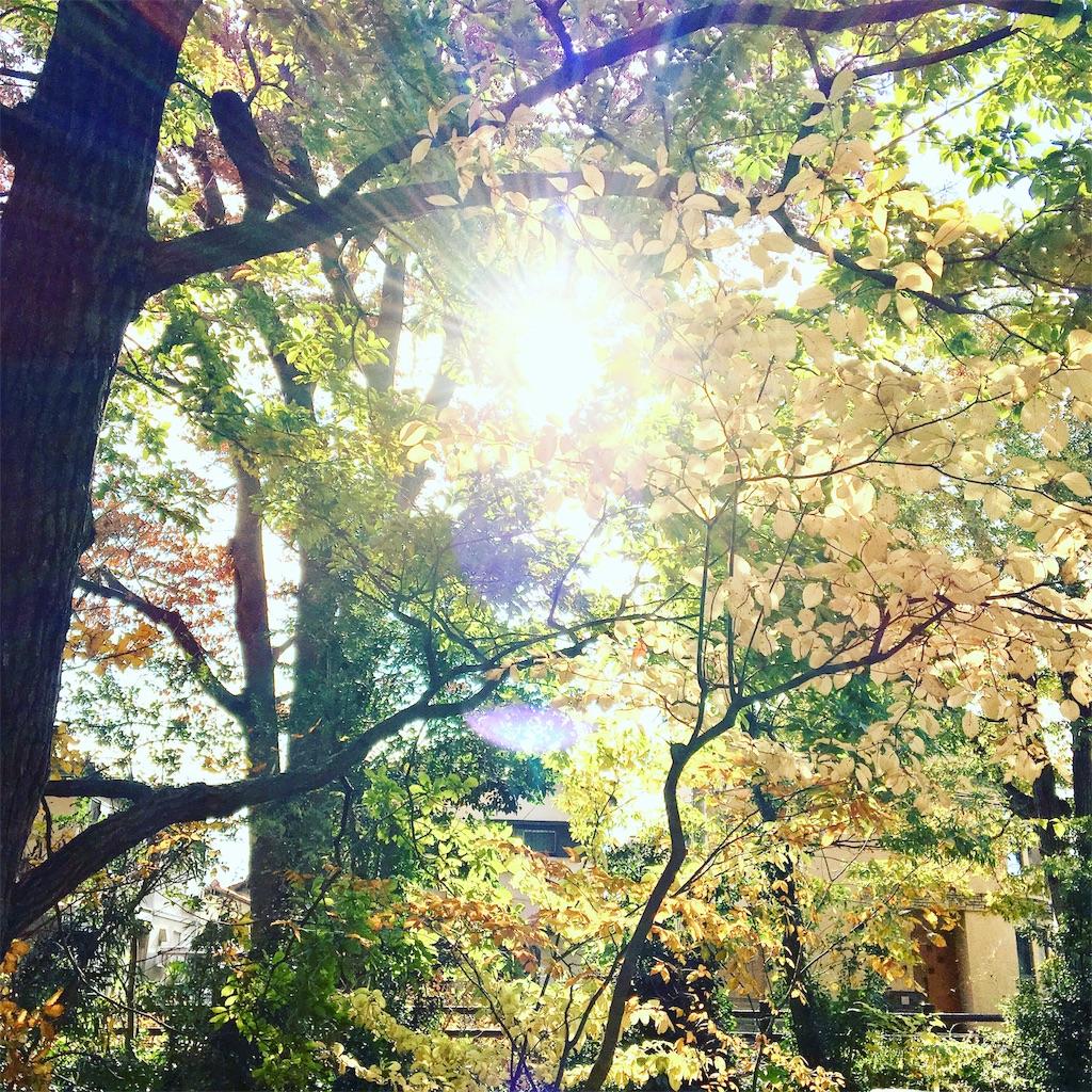 f:id:yukane_naito:20181201083041j:image