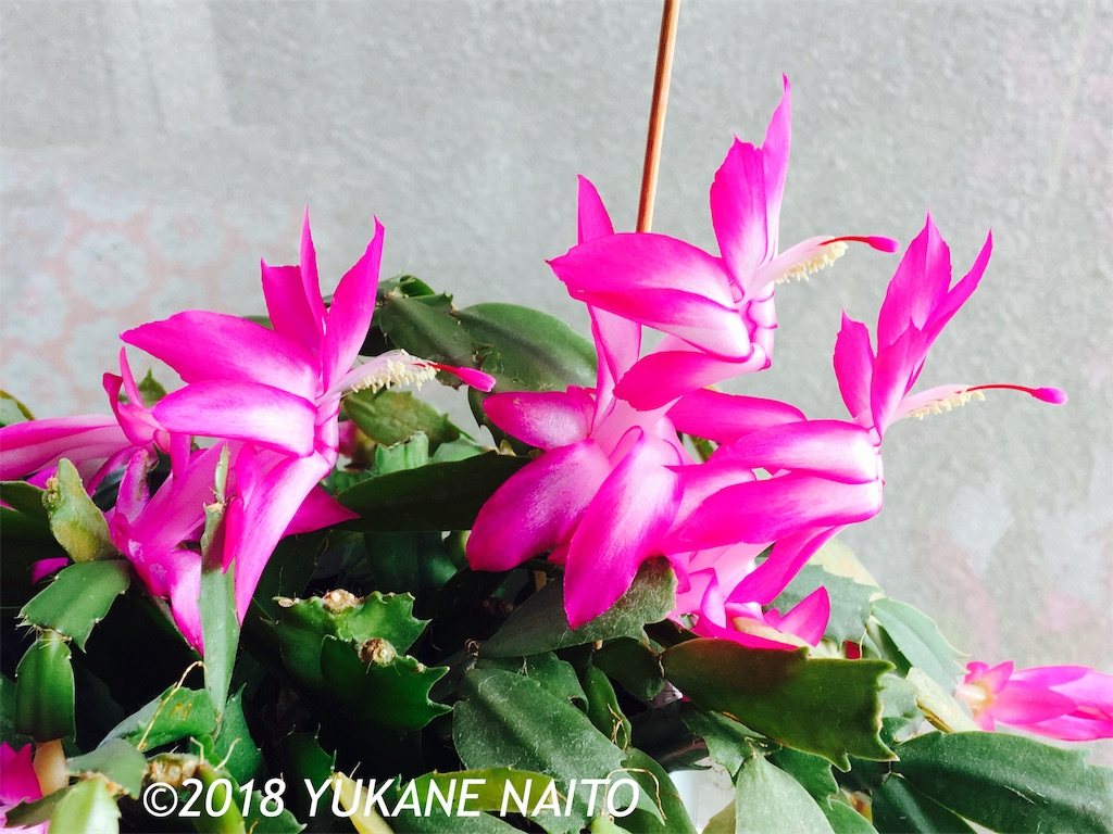 f:id:yukane_naito:20181208131827j:image