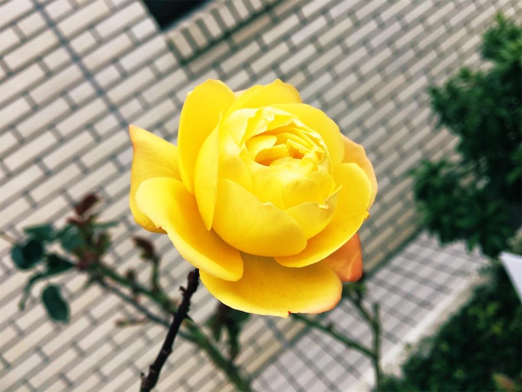 f:id:yukane_naito:20190401182504j:image