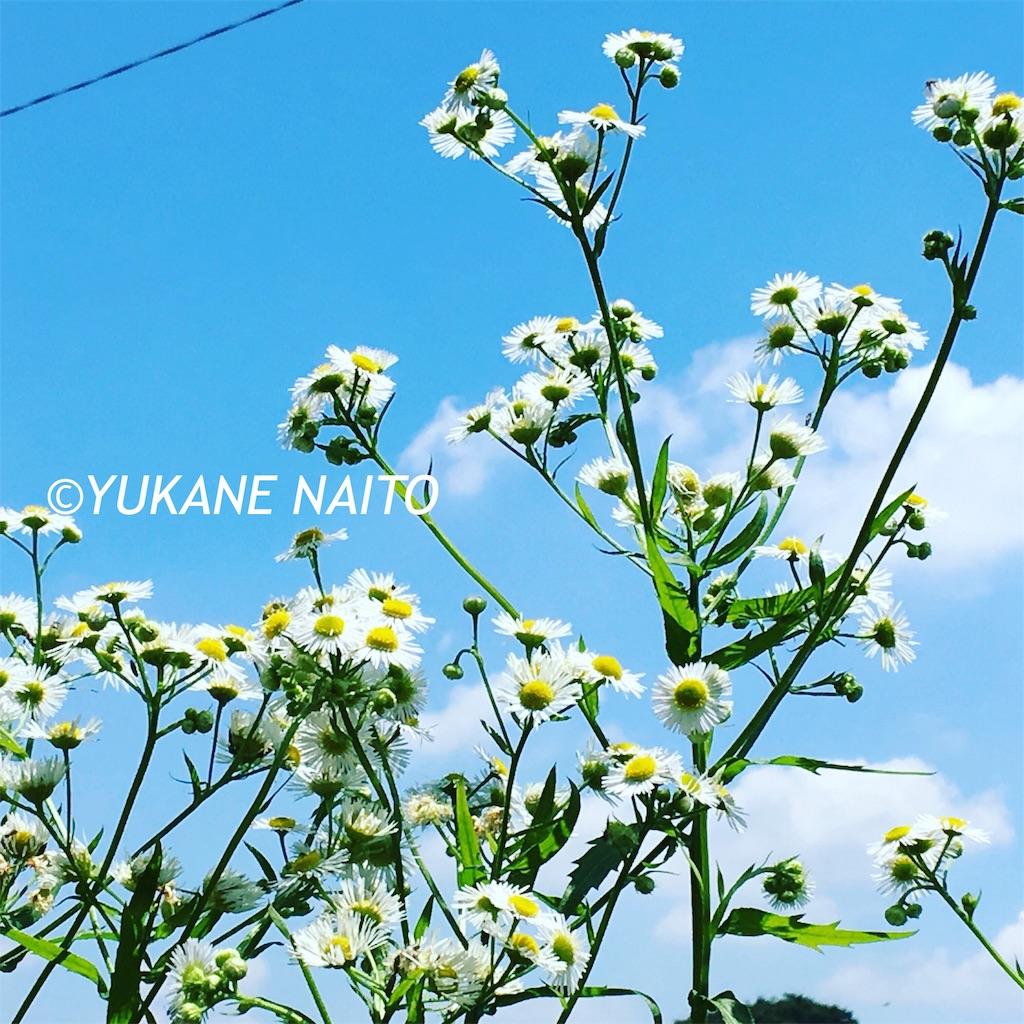f:id:yukane_naito:20190624132139j:image