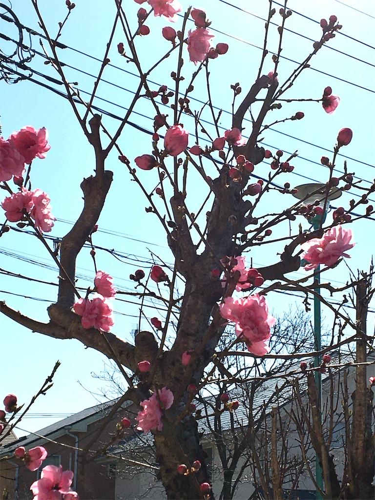 f:id:yukane_naito:20200319105015j:image