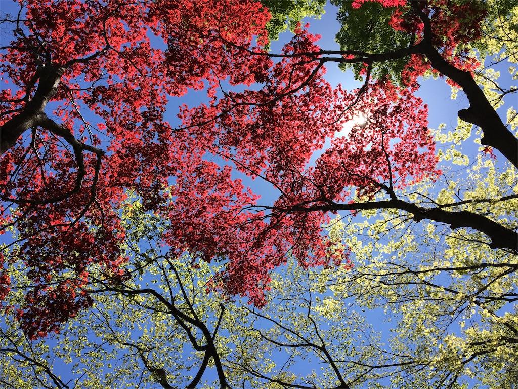 f:id:yukane_naito:20200420173421j:image