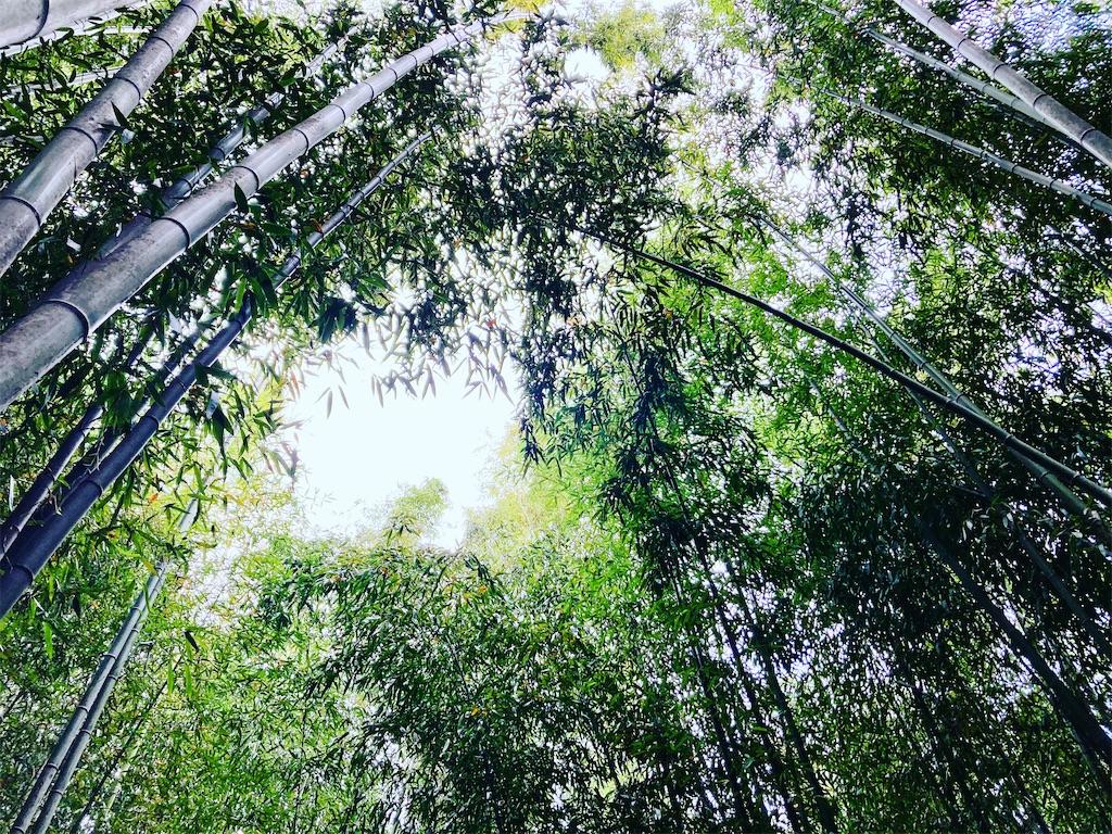 f:id:yukane_naito:20201126074128j:image