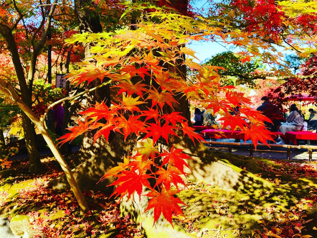 f:id:yukane_naito:20201128151419j:image