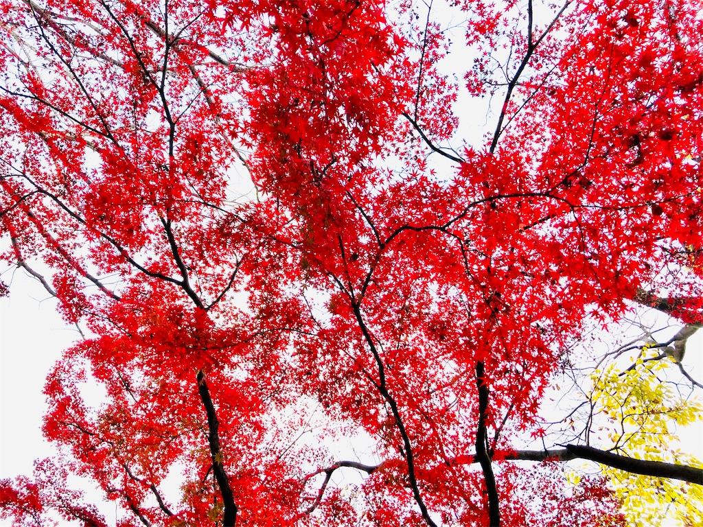f:id:yukane_naito:20201213085239j:image
