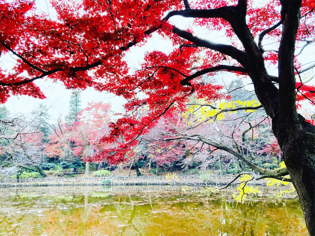 f:id:yukane_naito:20201215113008j:image