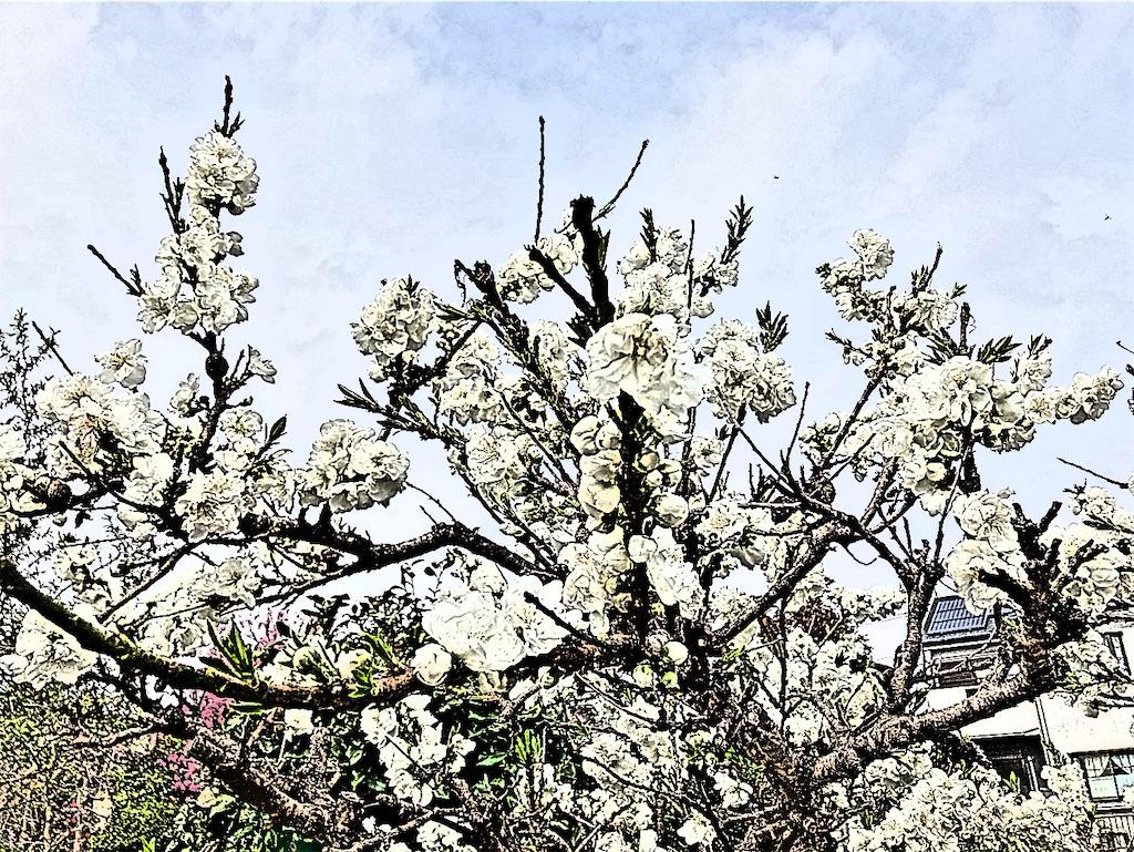 f:id:yukane_naito:20210403071025j:image