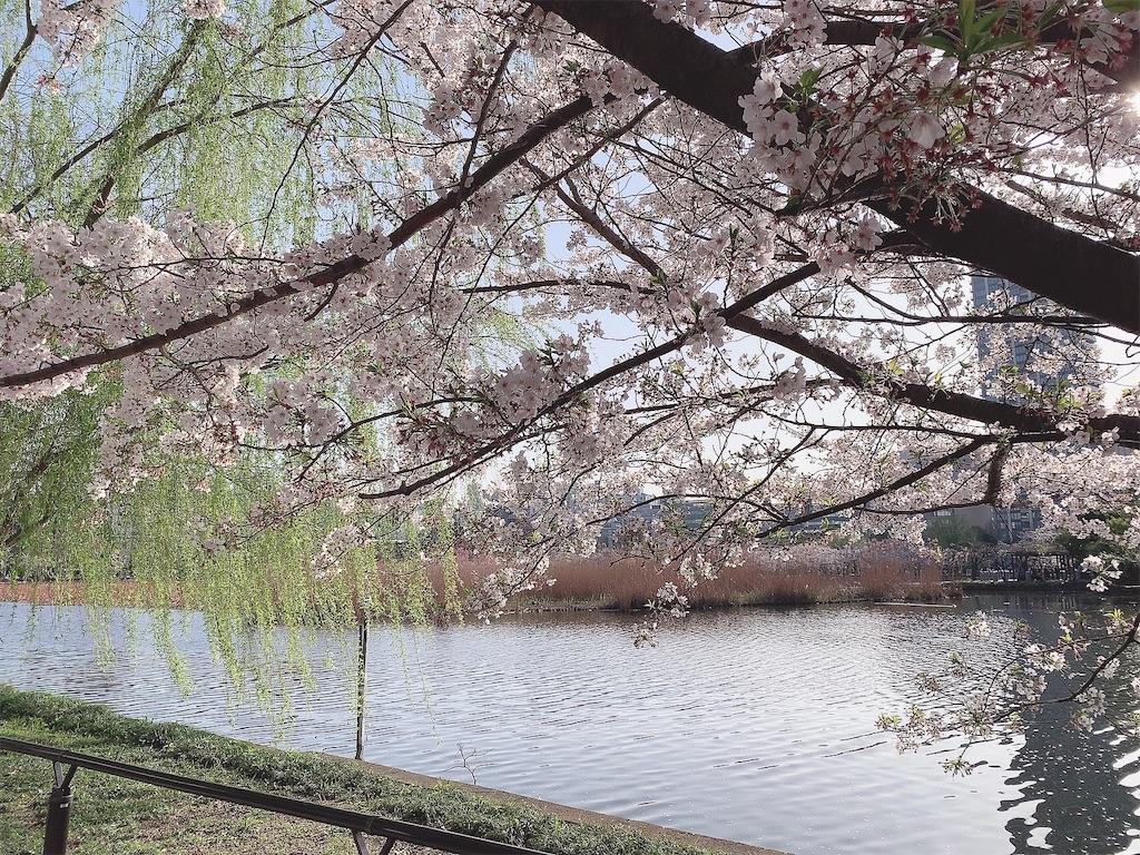 f:id:yukanyohu:20210402033104j:image