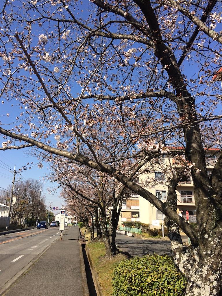 f:id:yukari3277:20200325234013j:image