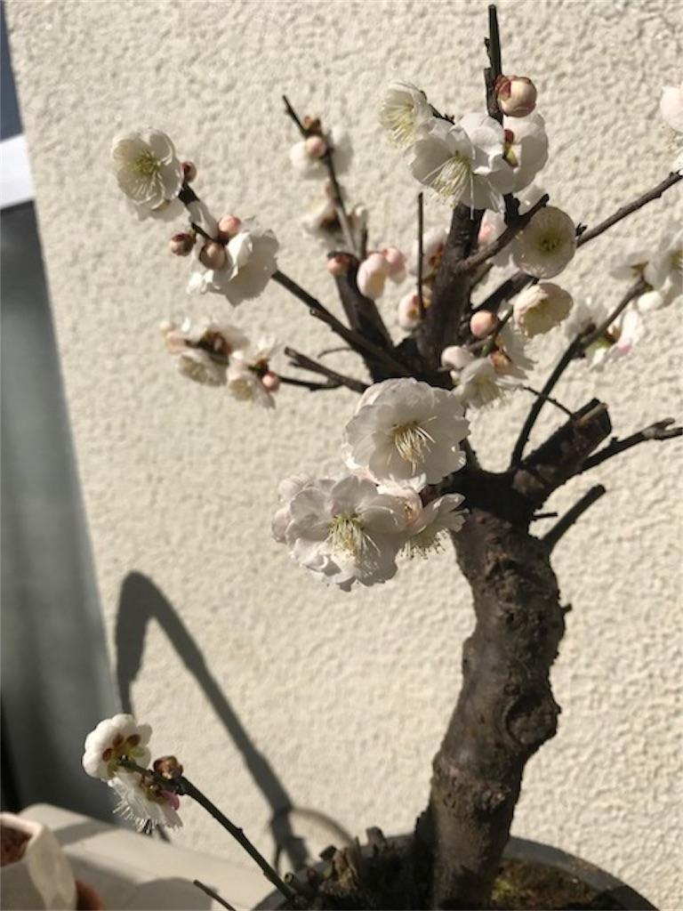 f:id:yukari35:20180305181835j:image