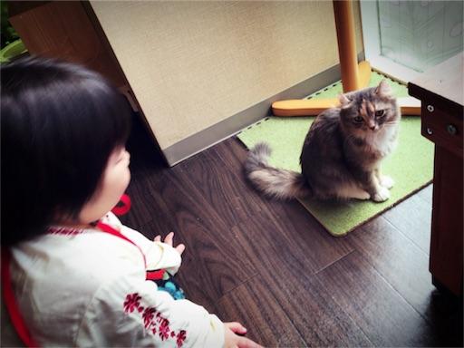 f:id:yukari_7hc9:20180114235314j:image