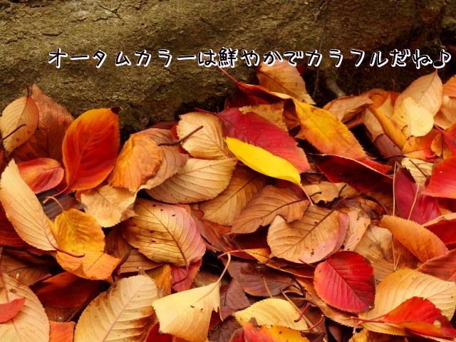 f:id:yukatamusubi:20160912171227p:plain