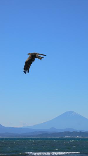 新江ノ島水族館近くの片瀬西浜にて 相模湾の向こうに富士山。