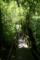 屋久島、ヤクスギランド。入口からすぐの「ときめきの径」付近。