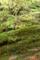 屋久島、ヤクスギランド。岩が苔に覆われる。苔は水をたっぷり含む。
