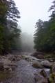 [旅行][屋久島]屋久島、ヤクスギランドの「つつじ河原」にて。清冽な流れと霧。