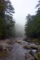 屋久島、ヤクスギランドの「つつじ河原」にて。清冽な流れと霧。