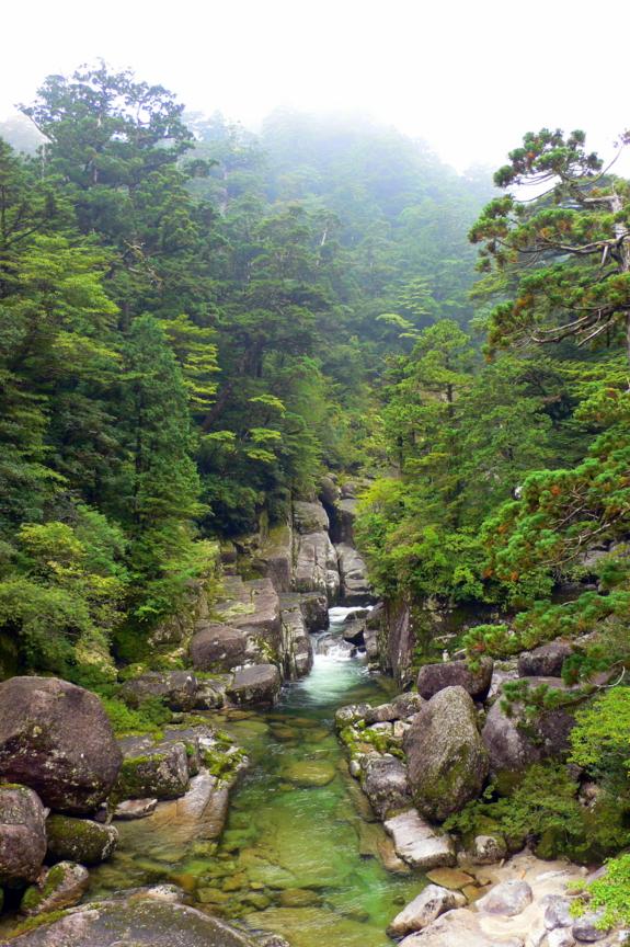 屋久島、ヤクスギランド、沢津橋。花崗岩は十文字にすっぱり割れる。