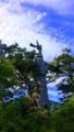 [植物][旅行][屋久島]屋久島、紀元杉。樹高19.5m、胸高周囲8.1m、推定樹齢3000年。