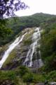 屋久島、大川の滝(おおこのたき)。落差88m。雨天で、やや水量多め。