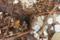 屋久島、栗生川河口の塚崎タイドプール。山から屋久杉が流されてくる