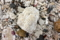 屋久島、塚崎タイドプール。くだけた珊瑚と、貝殻と……。