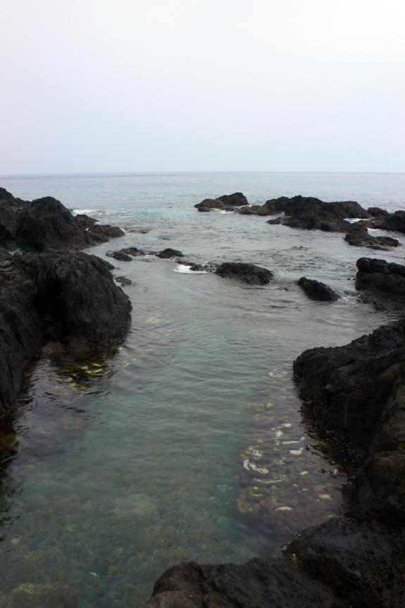 屋久島、塚崎タイドプール。サンゴが一部、白化している。