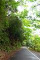 [植物][旅行][屋久島]屋久島、西部林道にて。世界遺産指定地域。静かな照葉樹林の森。