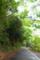 屋久島、西部林道にて。世界遺産指定地域。静かな照葉樹林の森。
