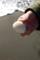 波打ち際に埋もれていた貝殻