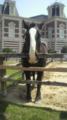人懐こい馬