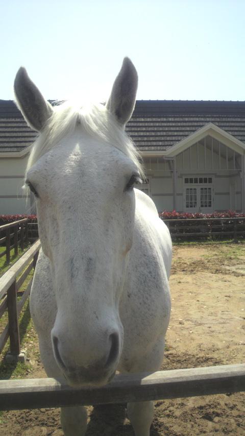 おとなしい馬。14歳